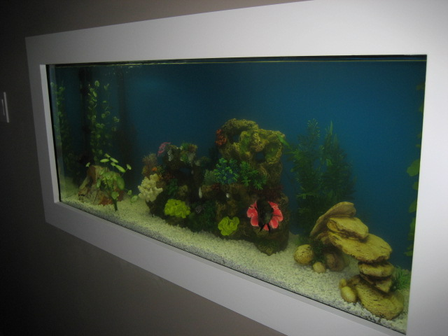 Fish Tank in Hallway